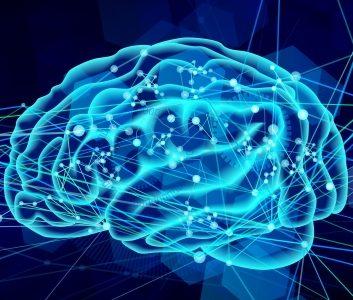 【脳の学習の解明】Lara Boyd「この演説であなたの脳は変わる」翻訳と考察