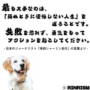 幸田シャーミン光代 名言 後悔 犬のイラスト