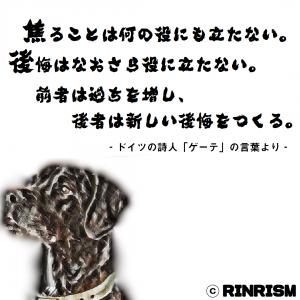 ゲーテ 焦りと後悔 名言 犬のイラスト
